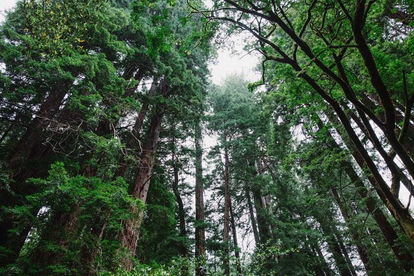Muir Woods - Elopement Locations near SF