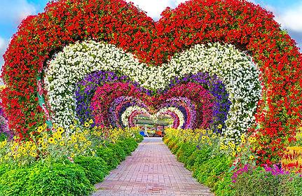 Dubai Miracle Garden.jpg