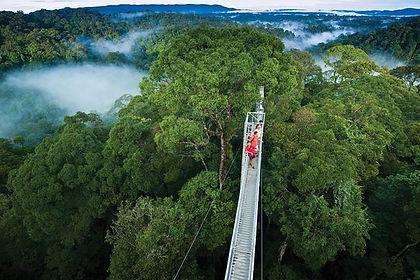 Temburong National Park.jpg