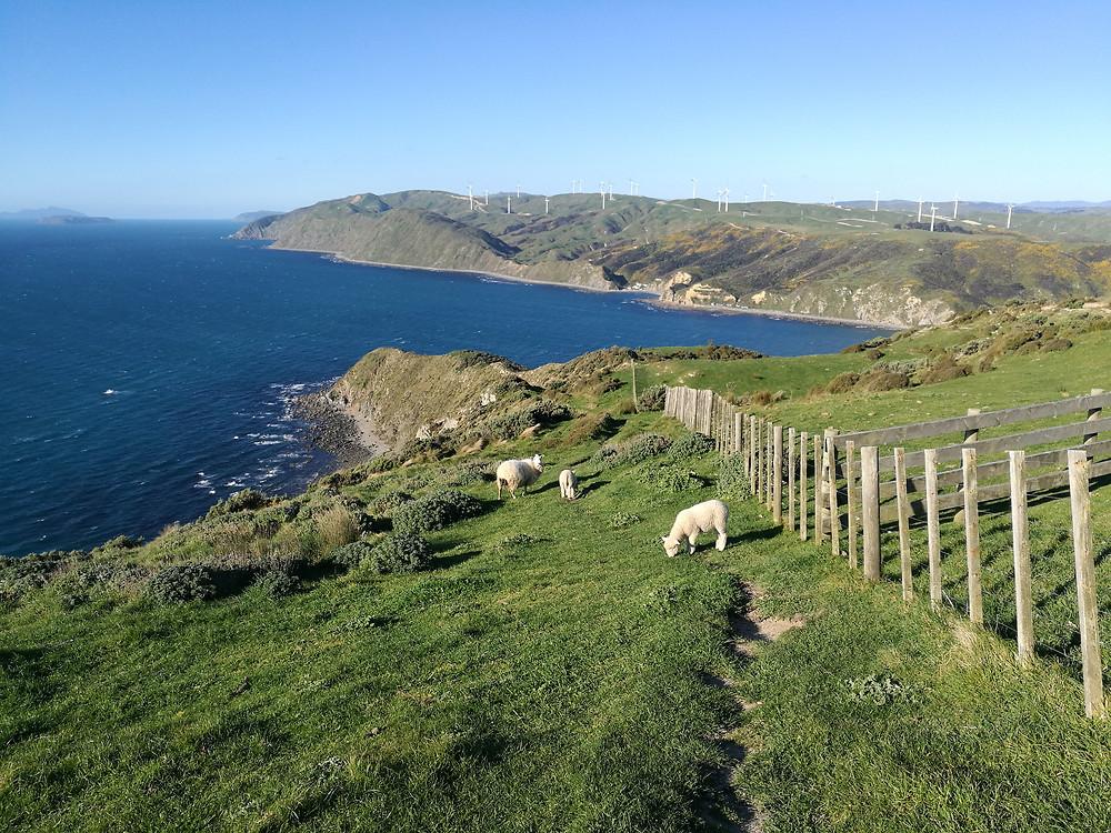 Makara Beach loop track. New Zealand. Latvieši Jaunzēlandē.