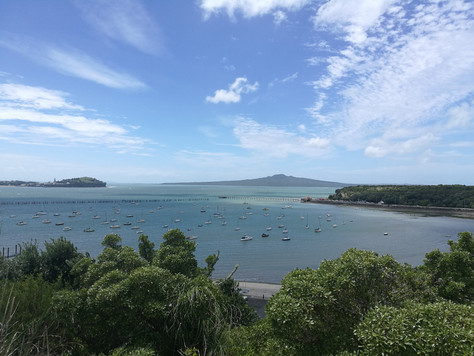 First steps in New Zealand - Auckland