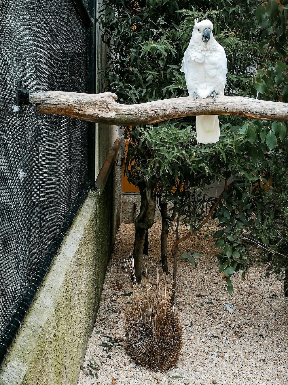 Dunedin Botanic Garden aviary