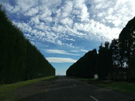 Work in NZ! Kiwi picking - packing experience!