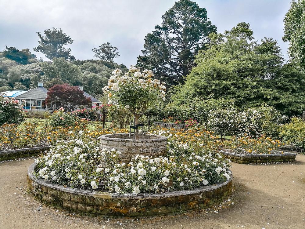 Botanic Garden Lower garden Dunedin