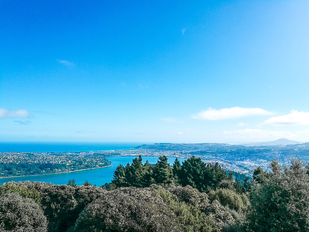 Signal Hill Lookout Dunedin