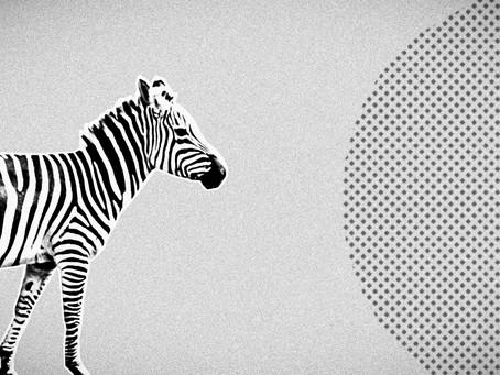 Kenia #3: Safari