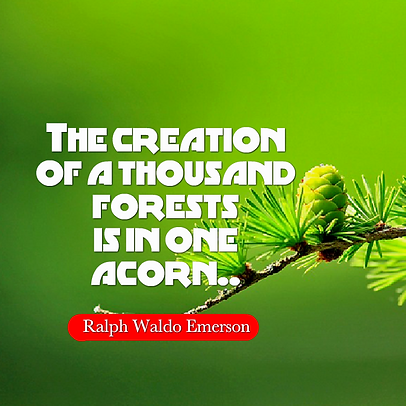 The creation of a thousand forests is in