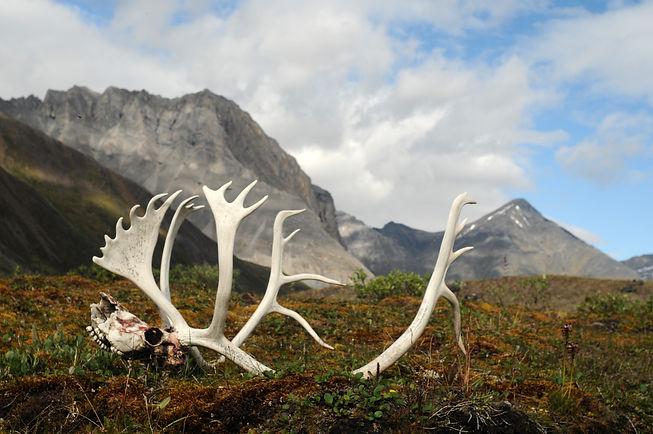 Caribou Landscape 2.jpg