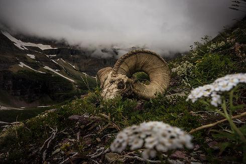 Bighorn Landscape.jpg