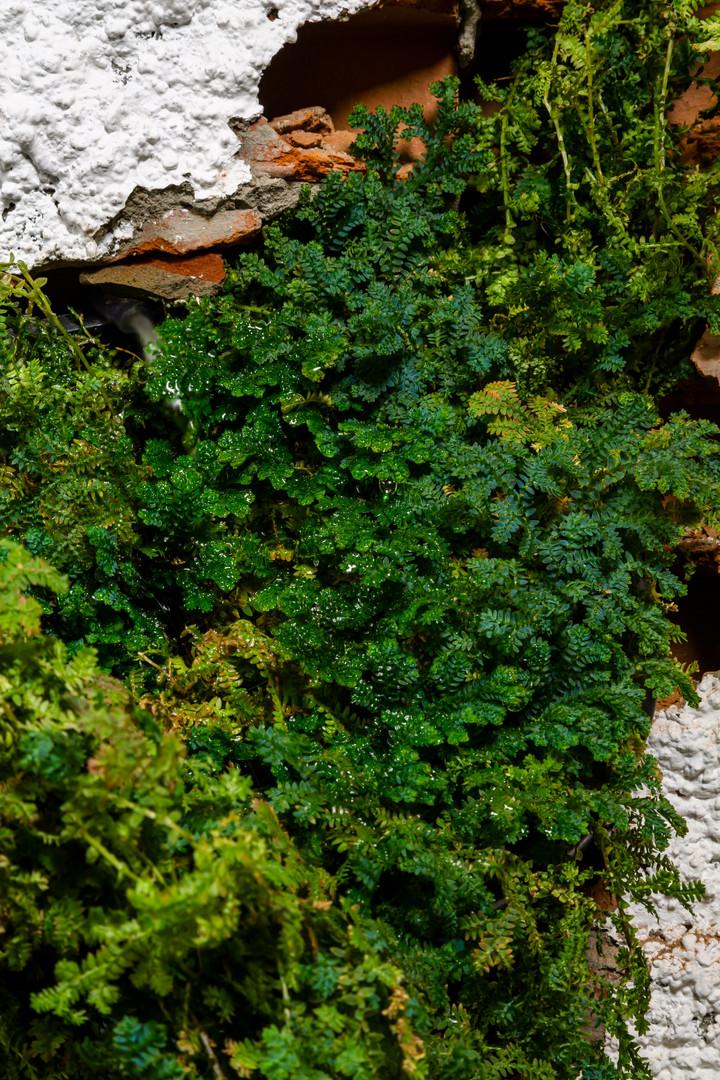 Estudo para florestamento de fissura planejada