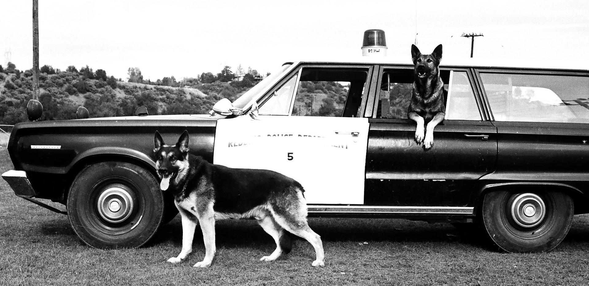 1968 2 dogs.jpg