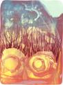 » Die Geburt « 2011, Lithographie auf Büttenpapier, 74 x 57 cm, Aufl. 8