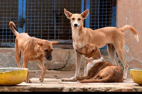 street_dogs_EPS.jpg