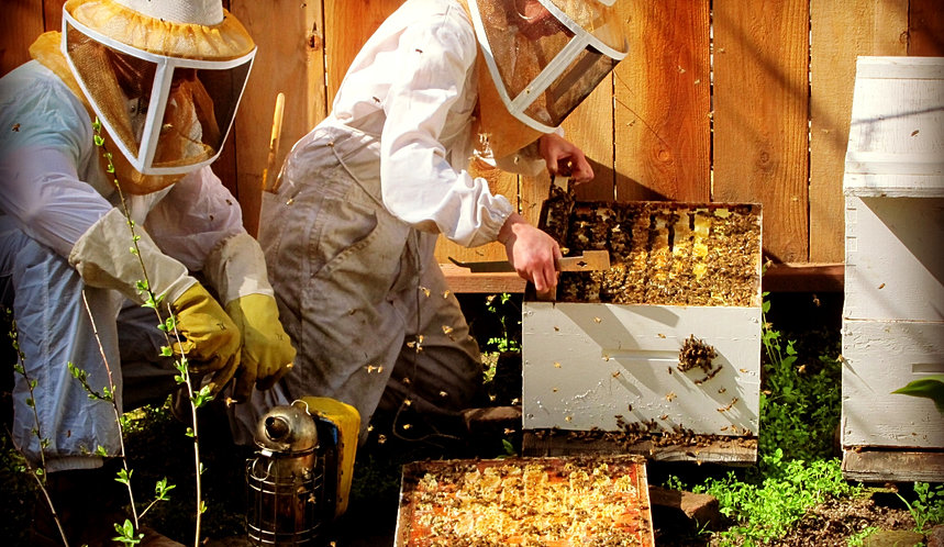 Essay on apiculture