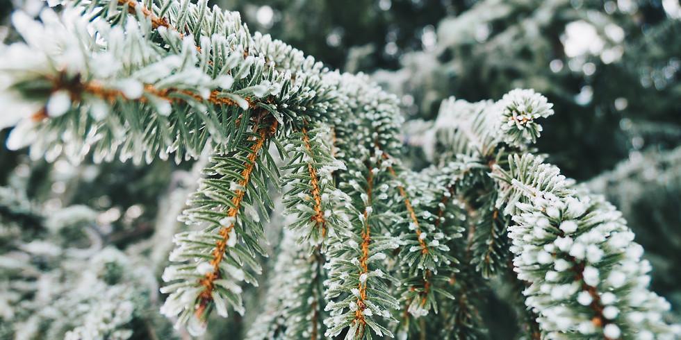 Glastonbury Frost Fayre