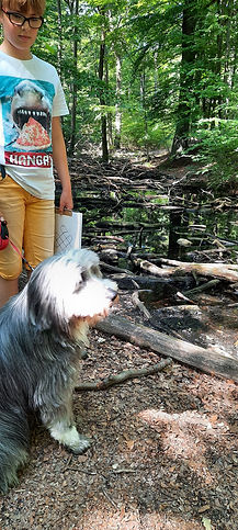 Lerntherapie Hund