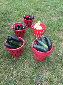 Bins of Produce