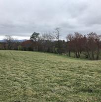 Pasture image 2.jpg