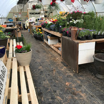 Inside the greenhouse.