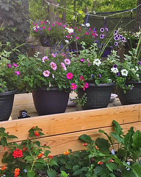 Spring annuals, patio planters, hanging baskets and garden starts