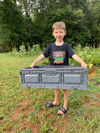 Boy with harvest tub