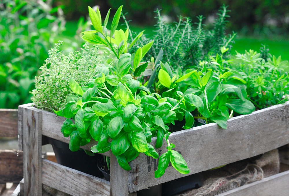 Leafy herbs like basil are excellent for freezing.