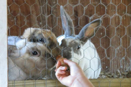 Snowy, Floppy Ears and Agatha love to ge