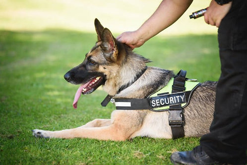 Security Dog First Aid Level 2