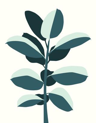Illustration: Rubber Tree Plant