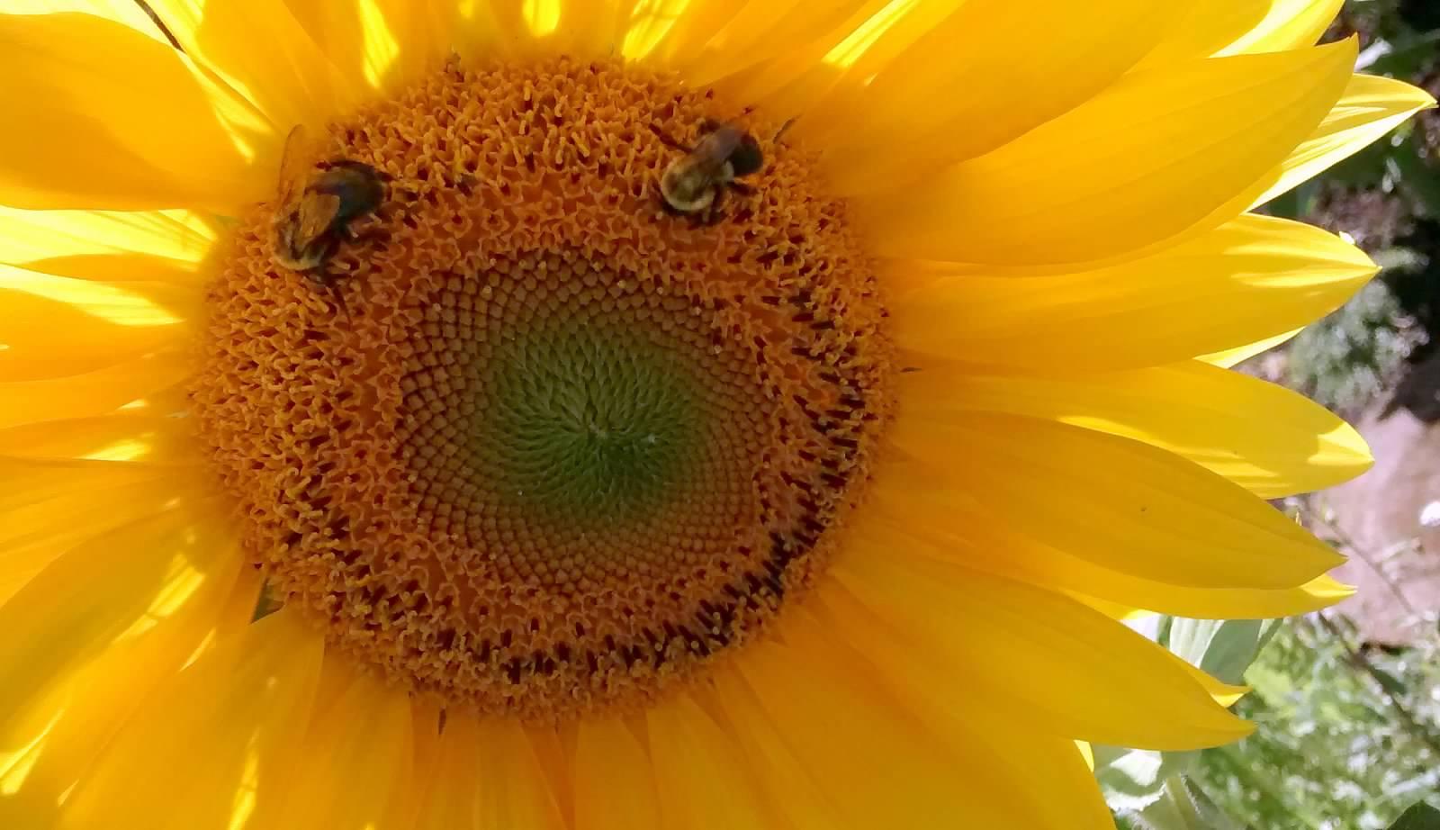 Pollinator Garden #3