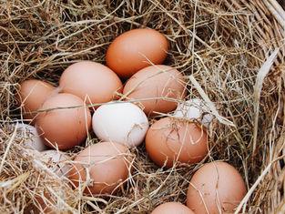 Verse eitjes op de Tesselse Kamping