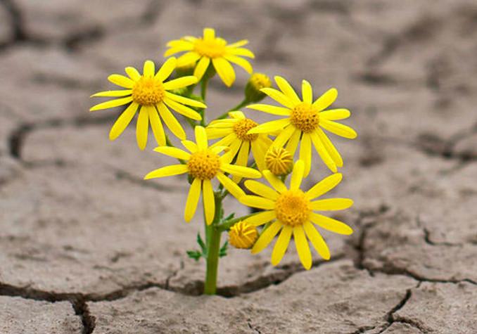 Résilience flower.jpg