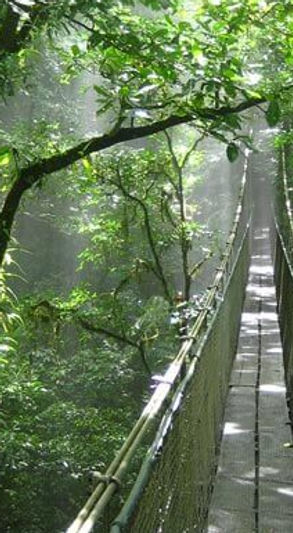 Adventure in Costa Rica, Hanging Bridges, La Fortuna