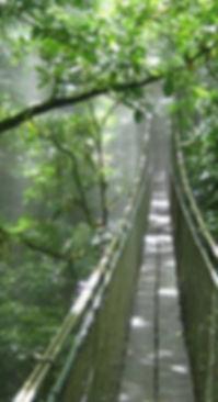 Adventure in Costa Rica, Hanging Bridges, La Fortuna
