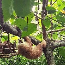 CL-casalunabeachhouse-sloth.jpeg