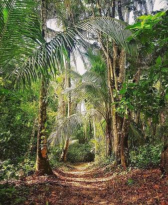 CLBH - path in jungle.jpg