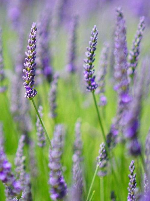Lavender brown sugar scrub 8oz