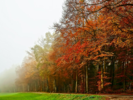Why Autumn is the Best Season For Photographers