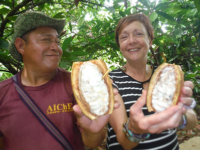 Armando shows Kris th cacao friut