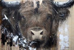 Vache Exotique