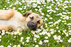 Spring is here!! (what does that mean for our dog?)