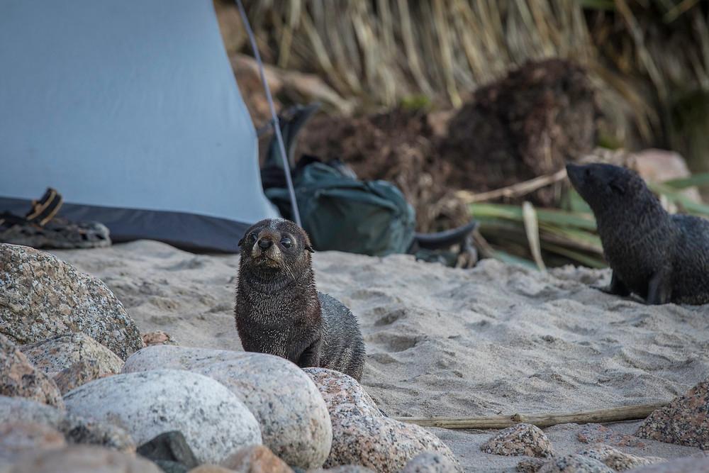 The seal pups weren't shy