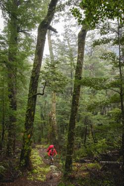 Mount Aspiring NP forest