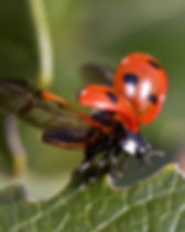 ladybug-743562_1280.jpg
