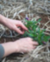gardening-1645815_1280.jpg