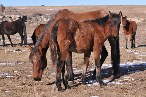 Sponsor Red Roan Colt and Roan Mare