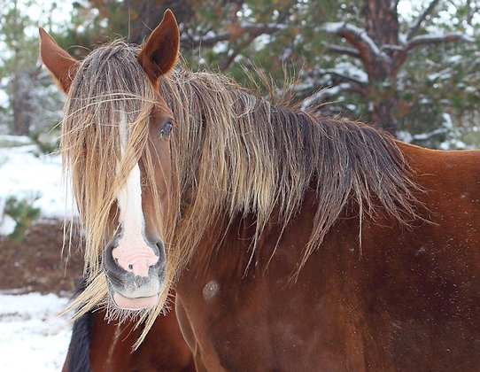 Shoshone Winter Friend