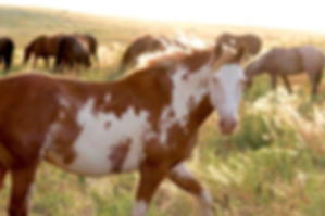 AfternoonLight-Mustang2.jpg.jpeg