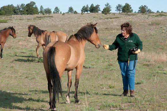 Spanish Mustang Bella Sponsor