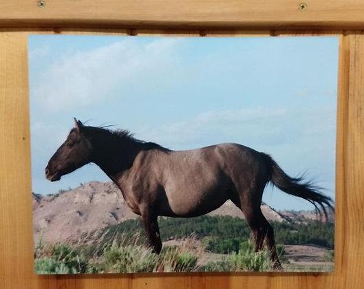 Mustang Photo-Frameless mount